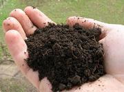 Сапропель (органическое удобрение)