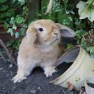 продам навоз от кролика