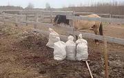 Органическое удобрение перегной конского навоза,  Минск